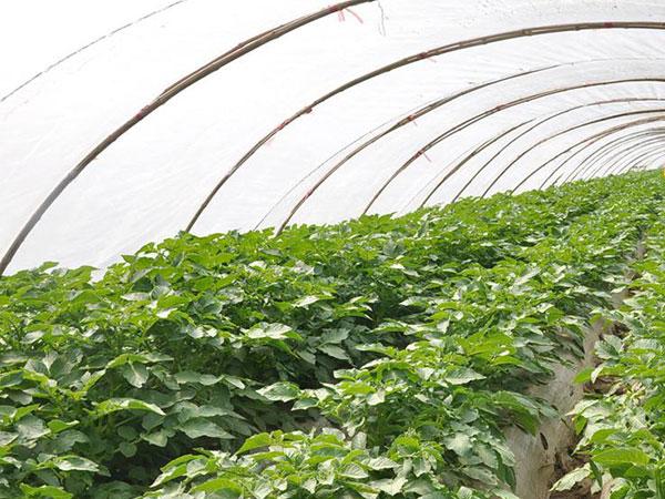 蔬菜防虫网